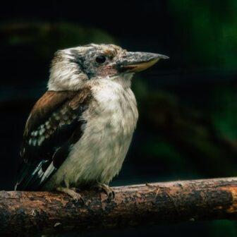 bird in denmark